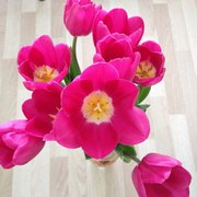 Тюльпаны оптом от 26 р. с доставкой во Владивосток!