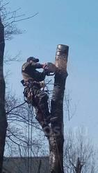 Спил деревьев. Спиливание деревье. Спилить дерево